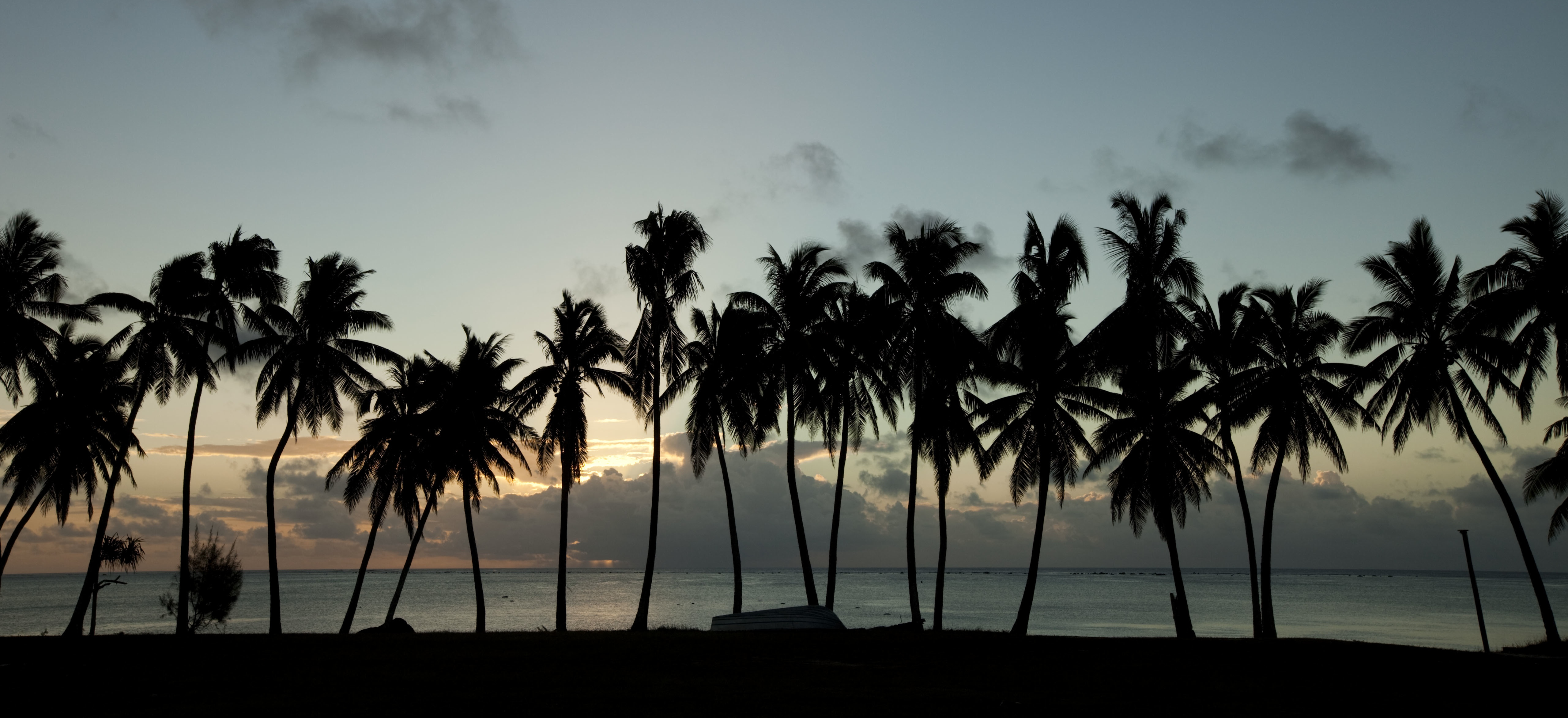 Palm Trees by Keiran Scott